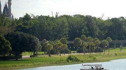 Alligators à Disney: une stagiaire dénonce les directives