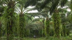De l'huile de palme bio et