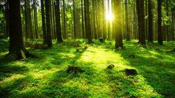 Japon: l'enfant disparu en forêt a été retrouvé