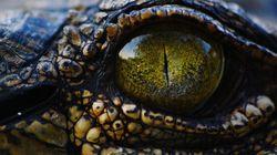 Un crocodile du zoo de Tunis tué à coups de pierres par des