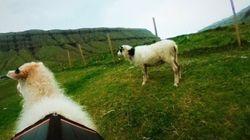 Privées de «Street View», les îles Féroé imaginent «Google Sheep