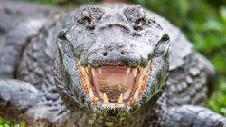 Le crocodile qui n'aimait pas les