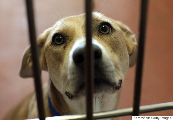 Un projet de loi privé pour la protection des animaux rejeté à