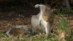 Cet écureuil vraiment «badass» vaut le