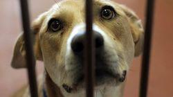 Triste record d'abandons d'animaux, selon la
