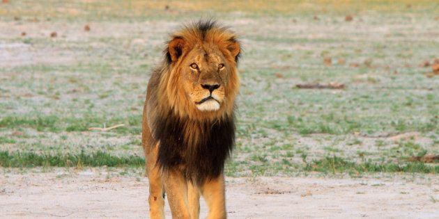 Cecil a été abattu en2015 par un dentiste américain au