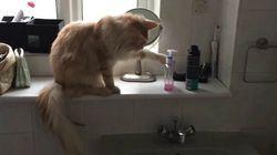Ce chat a sa propre définition du mot «ranger»