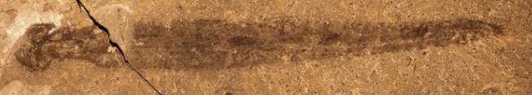Des chercheurs découvrent un fossile vieux de 500 millions d'années au