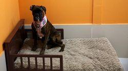 Dubaï : un hôtel pour chien à 190 dollars la