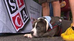 La SPCA ne s'occupera plus des chiens à