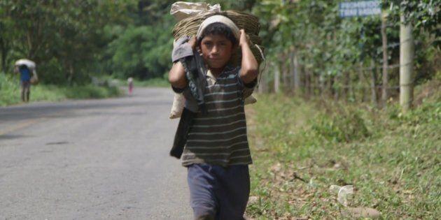 Travail des enfants dans les régions de production de