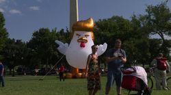 Mais que fait ce poulet géant à l'image de Donald
