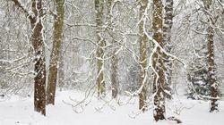 La tempête de neige continue dans certaines régions du
