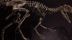 Vous ne devinerez jamais pour quelle somme ce squelette a été vendu aux