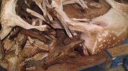 Un nombre élevé d'animaux seraient maltraités et décédés au Marineland