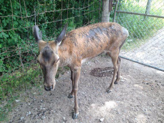 Un nombre élevé d'animaux seraient maltraités et décédés au parc Marineland Ontario, selon un ex-employé
