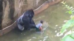 J'aurais tué 10 gorilles pour juste une chance de sauver un