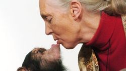 Jane Goodall soutient le directeur du zoo au sujet du gorille Harambe,