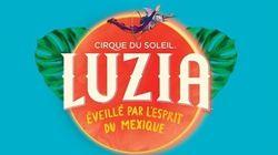 Cirque du Soleil: un employé du spectacle Luzia meurt à San