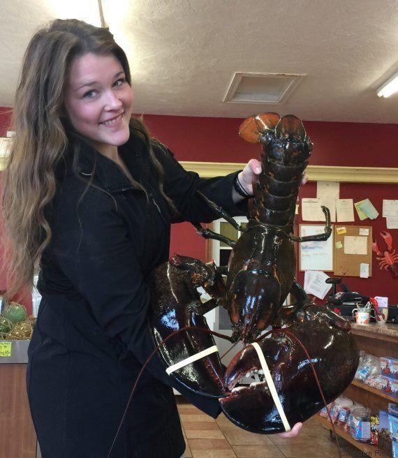 Un homard géant pêché dans la baie de Fundy, puis remis à l'eau par un
