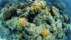 La Grande Barrière de corail est décimée par le réchauffement des