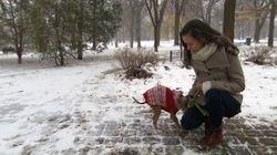 Des centaines d'amendes salées aux propriétaires de chiens non