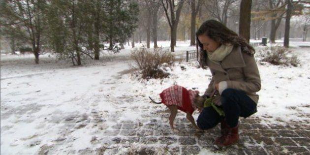 Des centaines d'amendes salées distribuées aux propriétaires de chiens non