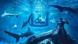 Vous pourriez dormir avec des requins... gratuitement!