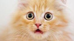 80 chats réagissent à l'élection de