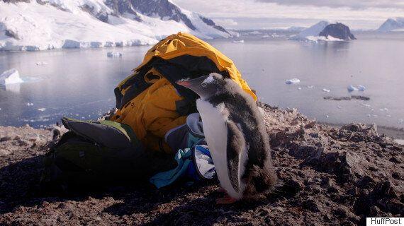Je suis allée au Pôle Sud et voici pourquoi vous ne devez pas