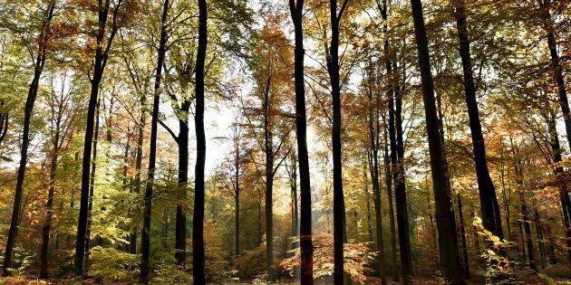 Équinoxe d'automne: Pourquoi les arbres ne se font jamais