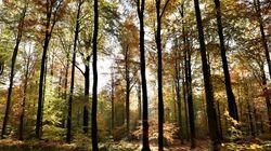 Pourquoi les arbres ne se font jamais surprendre par l'équinoxe