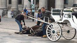 Un cheval de calèche s'effondre dans le