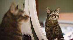Quand un chat danse avec son reflet dans le