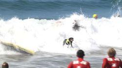 Compétition de surf canin en