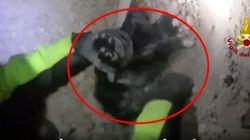 Impossible d'identifier cet animal sous les débris avant qu'il soit sauvé par les