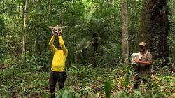 Des drones au service de la protection des forêts de