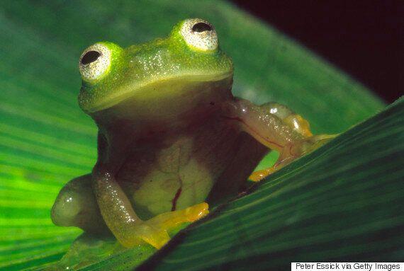 Les populations d'espèces réduites de moitié en 42 ans en raison de