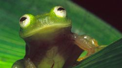 Les populations d'espèces réduites de 67% d'ici 2020 à cause de