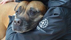 BLOGUE En cette journée mondiale des animaux, prenez position contre les lois