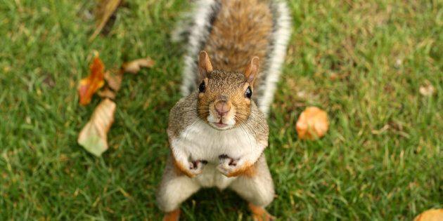 Laissons nos écureuils en paix et repensons notre place dans le cycle de la