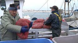 L'industrie des pêches menacée par le manque de