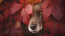 Ces portraits de chiens vous feront (re)tomber en amour avec
