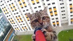 Essayez de ne pas avoir le souffle coupé durant le sauvetage de ce chat