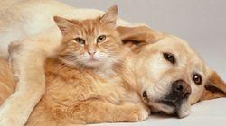 Un chat lèche son ami canin pour l'aider à