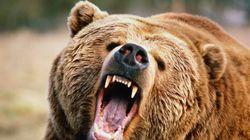 Attaqué par un grizzly, il s'en sort (à peine) vivant et filme ses