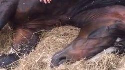 Ce cheval refuse de se