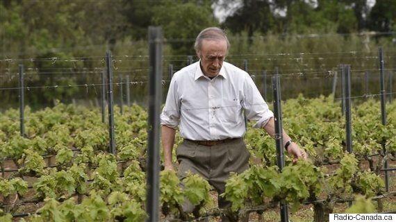 Les changements climatiques favorables à la production du vin au