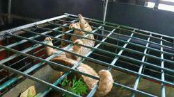 Une centaine de pangolins vivants saisis dans un bâteau de