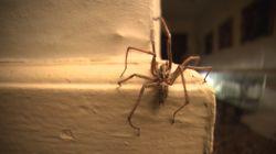 Entrez dans une maison infestée d'araignées pour